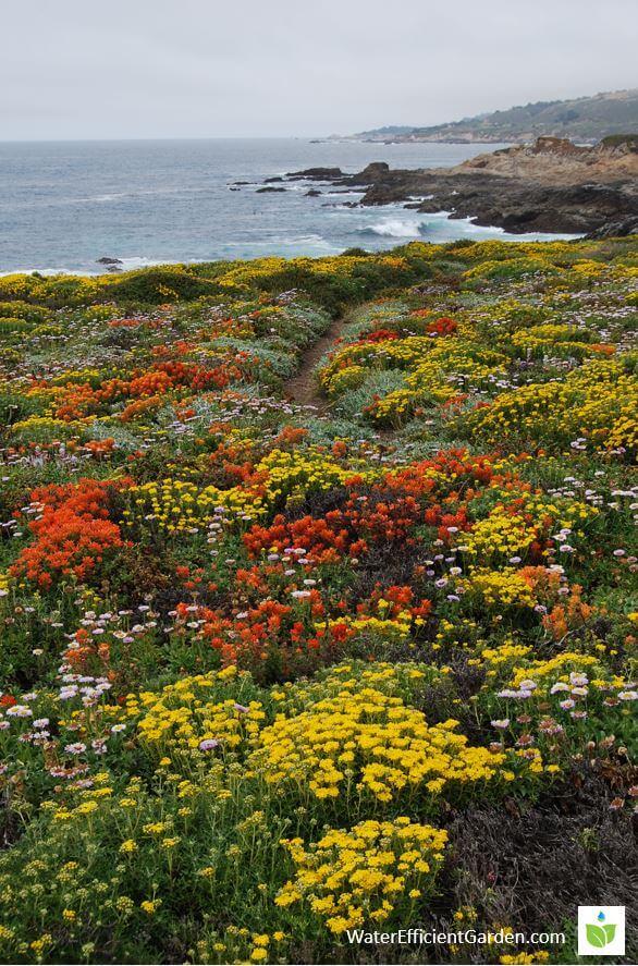 coastalwildflower2