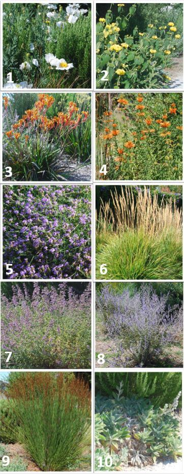 Native, Drought Tolerant Plants