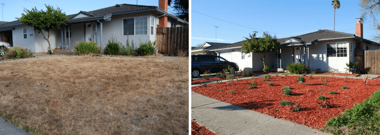 From Lawn to Water Efficient Garden