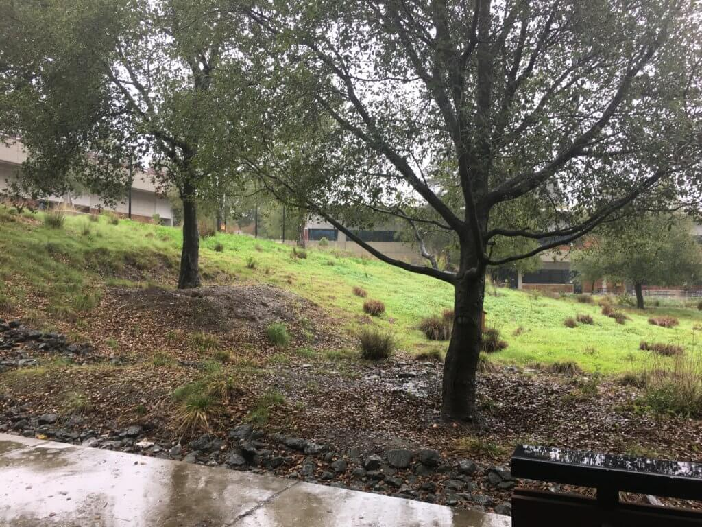 Trees Reduce Erosion by Stormwater