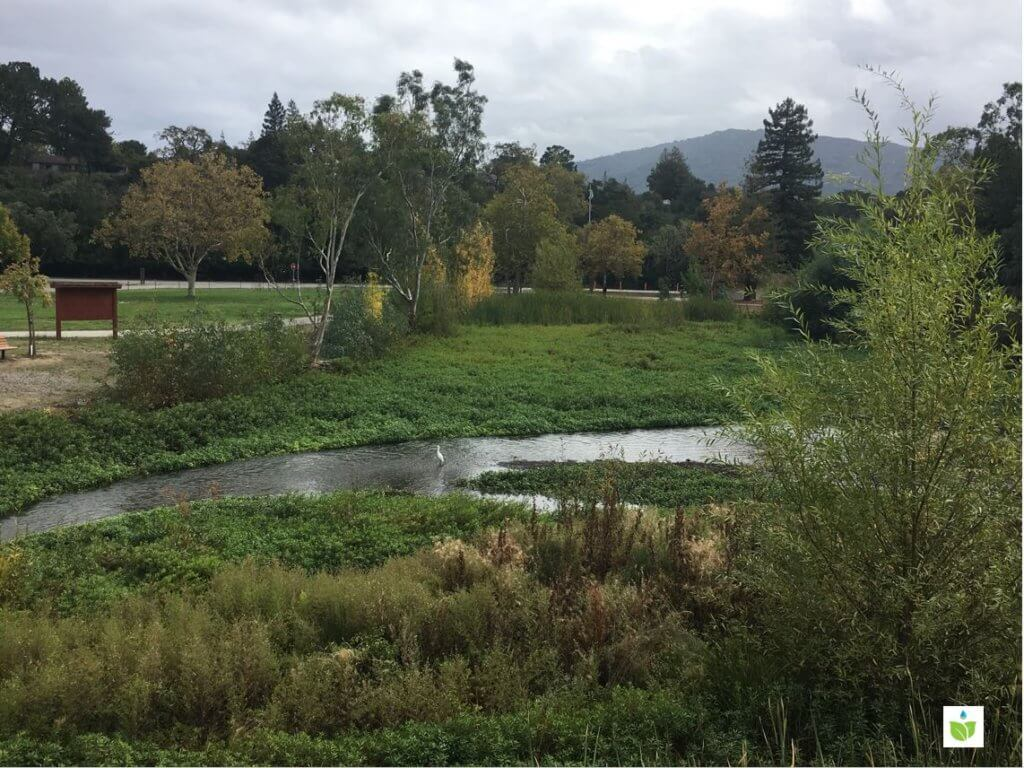 Los Gatos Creek