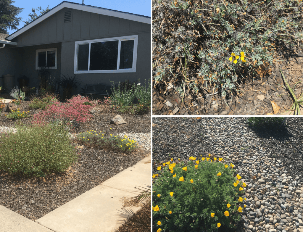 A garden with native plants