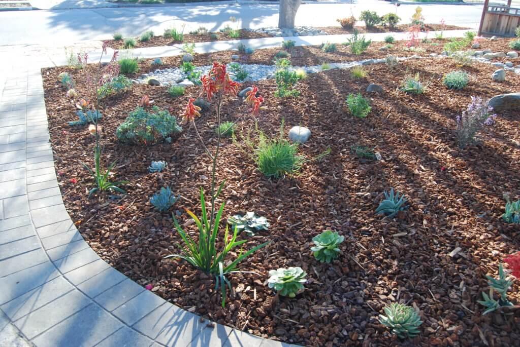 Catti Plant 1