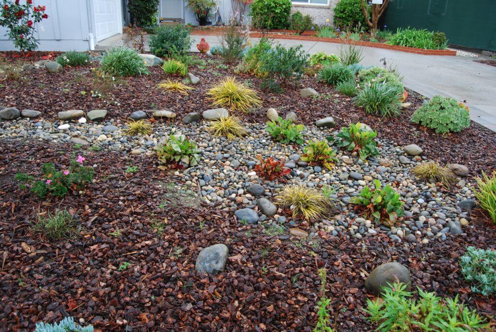 rain garden after rain