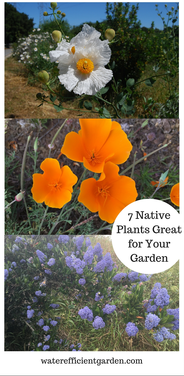 7 native plants great for your garden