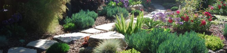 A California Native Garden: How Long Does It Take to Bloom ...