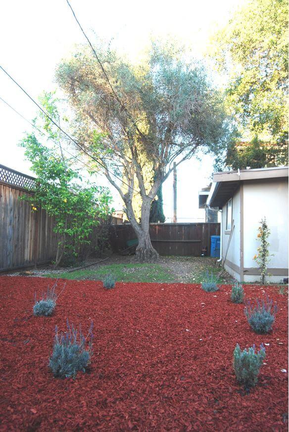 a water efficient garden