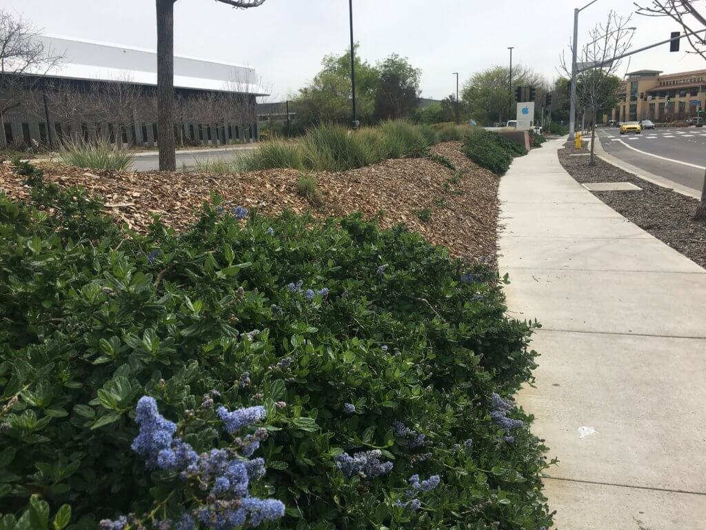 Native plants around Apple campus