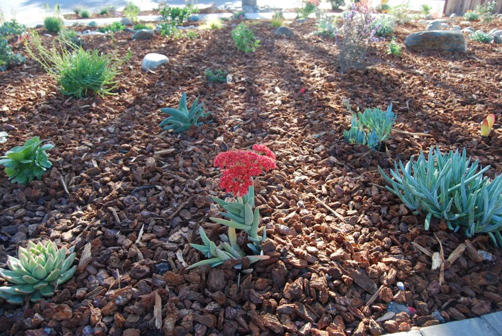Catti Plant 2